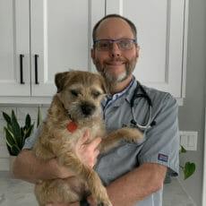 Veterinarian holding onto brown dog