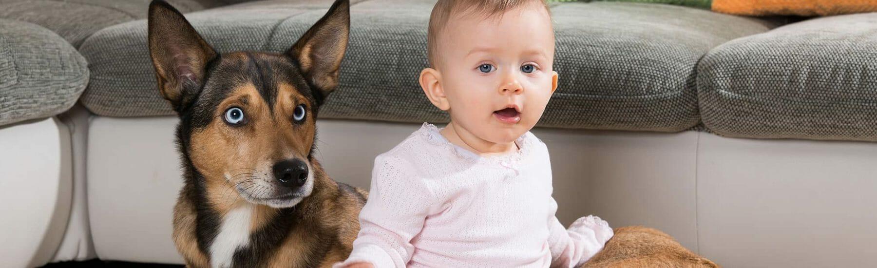 Dog and baby looking towards camera