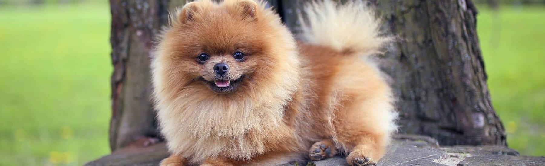 Small fluffy dog looking towards camera